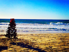 Christmas tree on the beach in San Diego. A classic San Diego Christmas tradition.