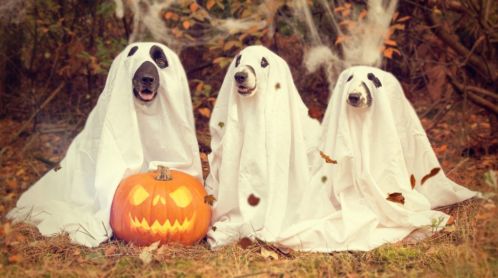 Dog halloween costumes contest in San Diego