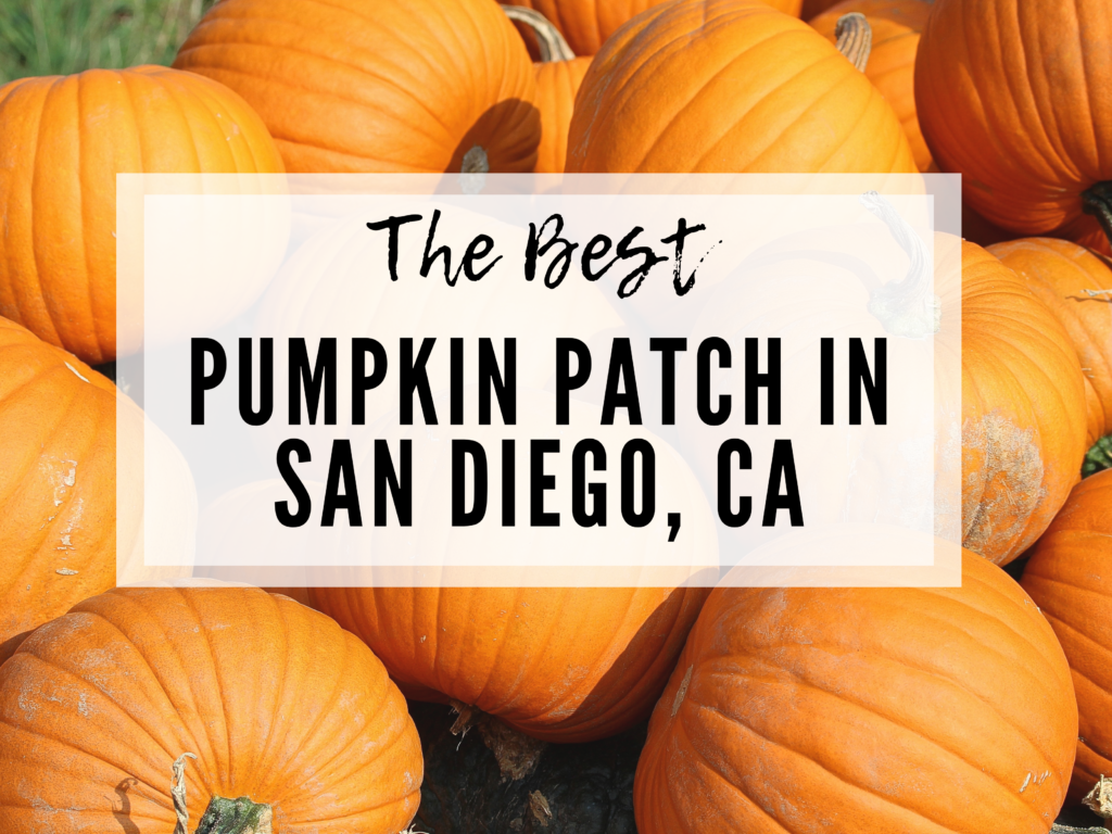 The best pumpkin patch for Fall in San Diego