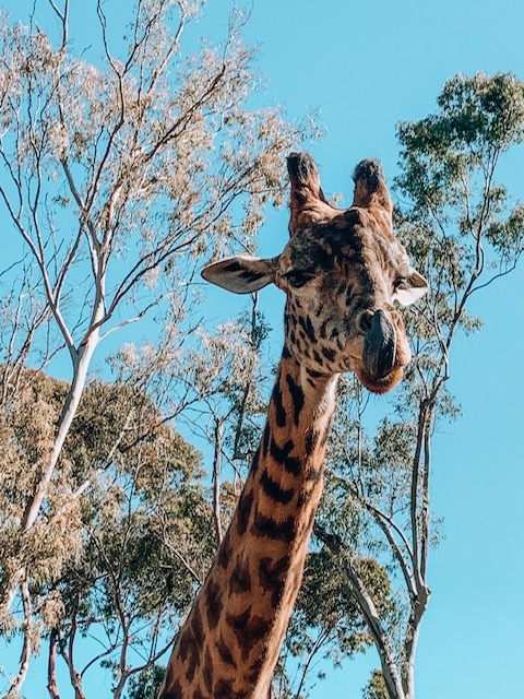 San Diego zoo things to do