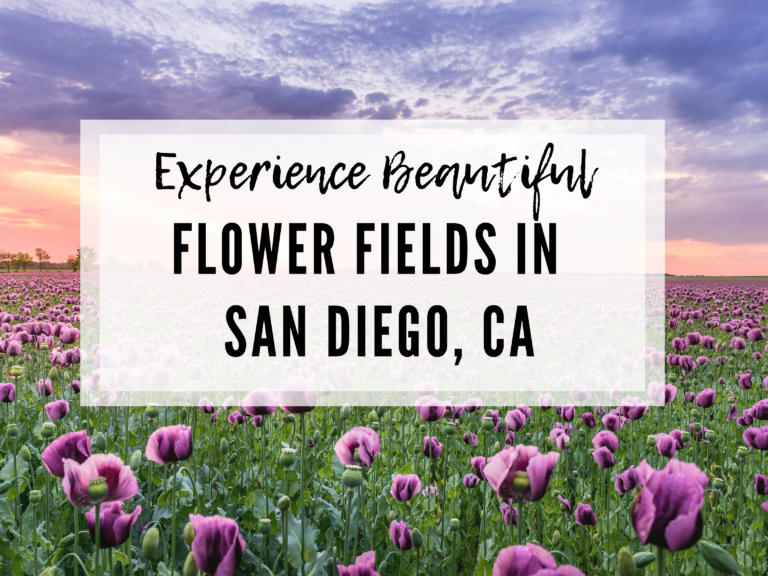 EXPERIENCE SOME OF THE BEST FLOWERS: CARLSBAD, CA