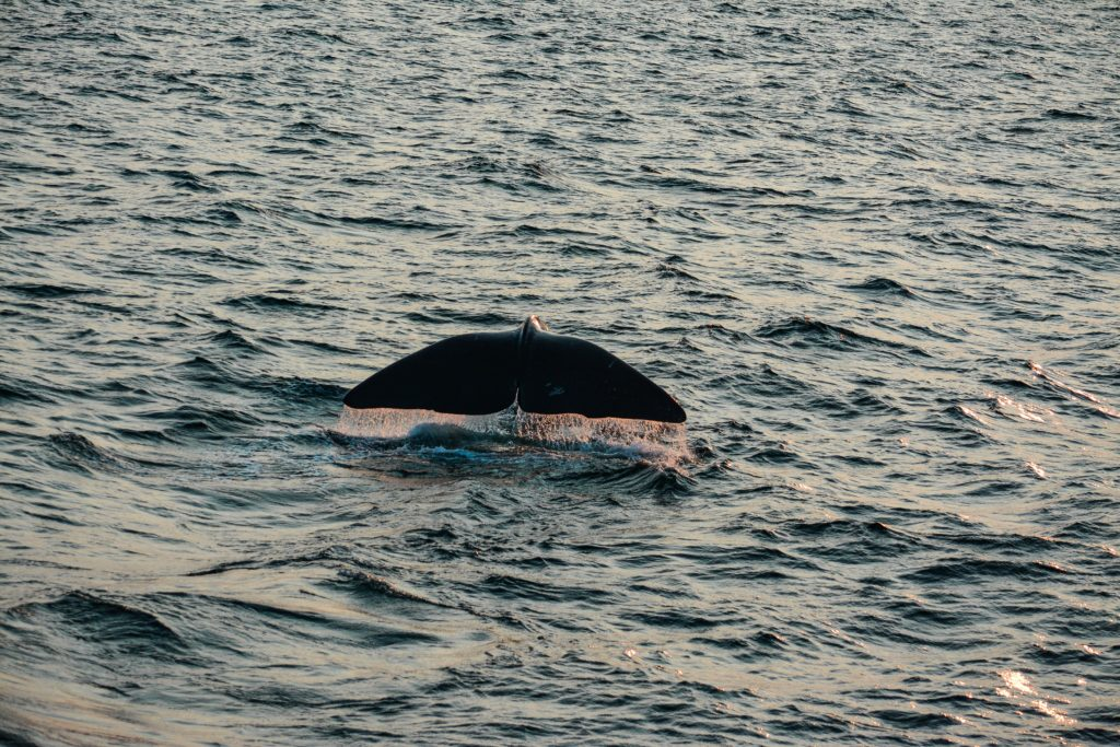 Whale watching is a common spring activity in San Diego