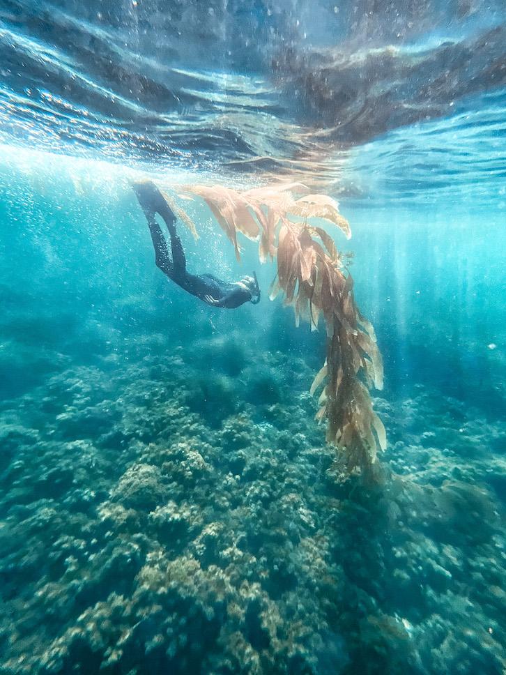 Girl snorkeling on Catalina Island