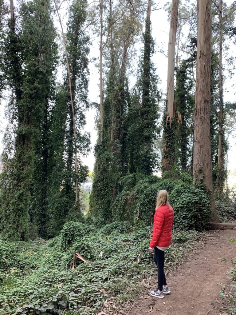 Chelsey hiking in Mt Sutro Forest which is one of the best hikes in San Francisco